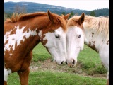 В мире животных. Лошади